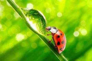 11 Τρόποι Βιολογικής Καταπολέμησης Εχθρών και Ασθενειών