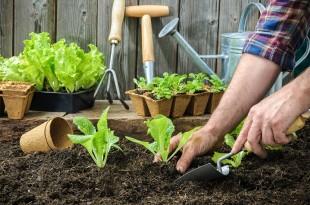 Δημιουργήστε το δικό σας λαχανόκηπο