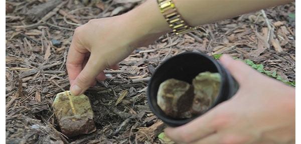 Φακελάκι Τσαγιού: Λίπασμα για τα Φυτά