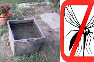 Παγιδέψτε τα Ενοχλητικά Κουνούπια με Φυσικό Τρόπο Χωρίς τη Χρήση Χημικών! Μάθετε Πως!