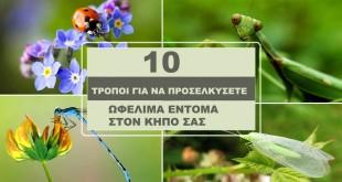 10 Τρόποι Για να Προσελκύσετε Ωφέλιμα Έντομα στον Κήπο Σας!