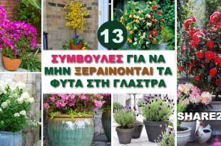 13 Συμβουλές Για να Μην Ξεραίνονται τα Φυτά στη Γλάστρα
