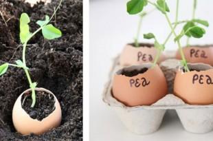Χρησιμοποιήστε Τρόφιμα που Σας Περισσεύουν στον Κήπο Σας! 8 Έξυπνες Ιδέες που Δεν Είχατε Φανταστεί!