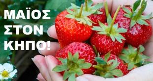 Οι Καλλιεργητικές εργασίες του Μαΐου στον Κήπο Σας! Διαβάστε Όλα Όσα Πρέπει να Ξέρετε!