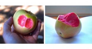 Μήλο με Ροζ Σάρκα Βγαλμένο από τη Φαντασία! Δείτε τις Εντυπωσιακές Φωτογραφίες!