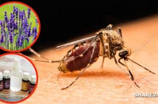 Απαλλαγείτε από τα Κουνούπια με Αυτό το Αποτελεσματικό Μη-τοξικό Εντομοαπωθητικό
