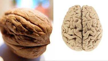 Τρόφιμα που μοιάζουν με μέρη του σώματος - Καρύδια και Εγκέφαλος