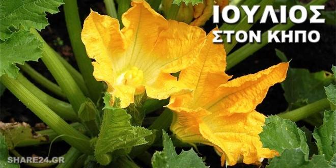 Οι Καλλιεργητικές Εργασίες του Ιουλίου Στον Κήπο Σας