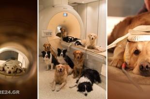 Έρευνα Αποκαλύπτει Ότι τα Σκυλιά Καταλαβαίνουν Πολλά από Όσα τους Λέμε