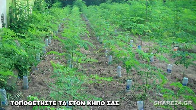 ΠΠότισμα με Φιαλες Νερού σε Όλα τα Φυτά του Κήπου