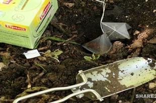 Δείτε τι Θαύματα μπορεί να κάνει στον Κήπο Σας ένα Φακελάκι Τσάι