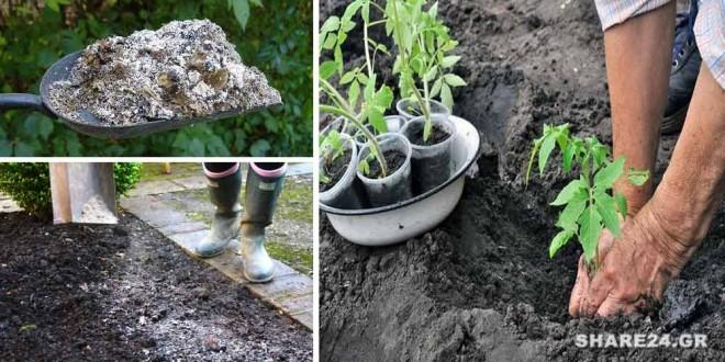 Πως να Χρησιμοποιήστε τη Στάχτη στον Κήπο Όλα τα Μυστικά που Πρέπει να Ξέρετε