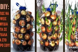 Φυτέψτε Κρεμμύδια με Αυτό το Κόλπο Κάθετης Φύτευσης για να Έχετε Φρέσκα Κρεμμύδια Όλο το Χρόνο στην Κουζίνα Σας