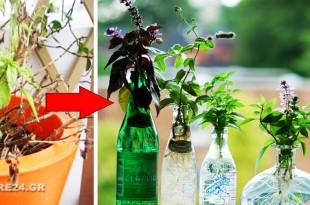 Πως να Διατηρήσετε τα Βότανα του Κήπου σε Βάζο με Νερό στο Σπίτι κατά τη διάρκεια του Χειμώνα