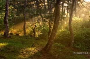Συλλογή Σπόρων από Δέντρα & Φυτά του Δάσους και Φύτευση στον Κήπο Σας
