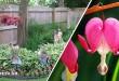 Τα Ομορφότερα Εξωτικά Φυτά για Διακόσμηση Σκιερών Κήπων και Αυλών!