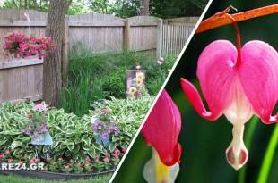 Τα Ομορφότερα Εξωτικά Φυτά για Διακόσμηση Σκιερών Κήπων και Αυλών