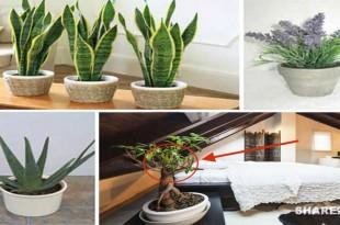 Βάλτε Αυτά τα 10 Φυτά στο Υπνοδωμάτιό Σας για να Κοιμάστε Καλύτερα και να Καθαρίσετε τον Αέρα που Αναπνέετε