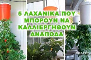 5 Λαχανικά που Μπορείτε να Καλλιεργήσετε Ανάποδα