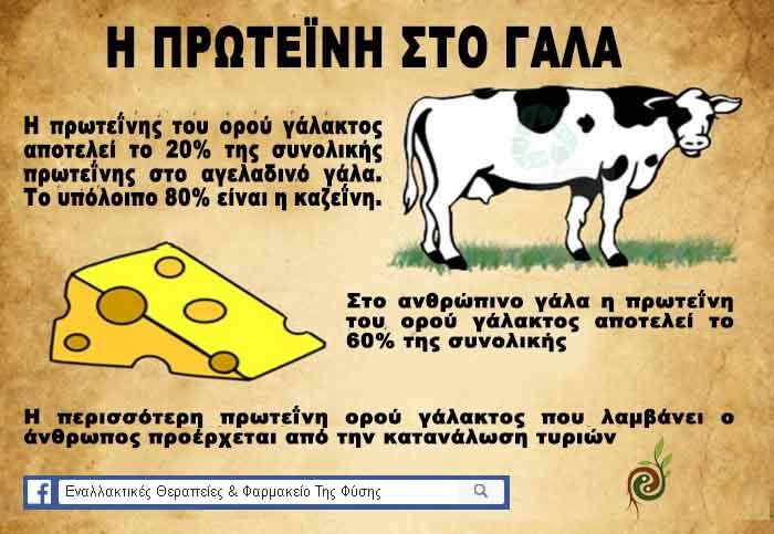 Πληροφορίες για την πρωτείνη στο γάλα