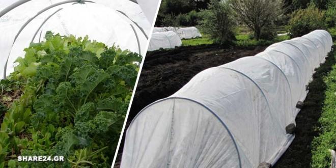 Φτιάξτε ένα μικρό Θερμοκήπιο για τα Φυτά του Κήπου Σας Εύκολα με Αυτόν τον Τρόπο