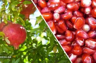 Καλλιεργήστε μια Ροδιά από Σπόρο με Αυτόν τον Εύκολο Τρόπο