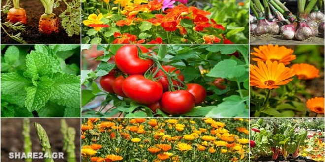 Ποια Φυτά ΔΕΝ Πρέπει να Φυτεύονται Δίπλα-Δίπλα στον Κήπο