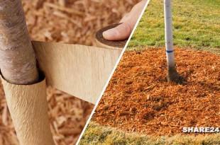 Προστατεύστε τα Καρποφόρα Δέντρα κατά τη Διάρκεια του Χειμώνα - Όλες οι Εργασίες που Πρέπει να Κάνετε