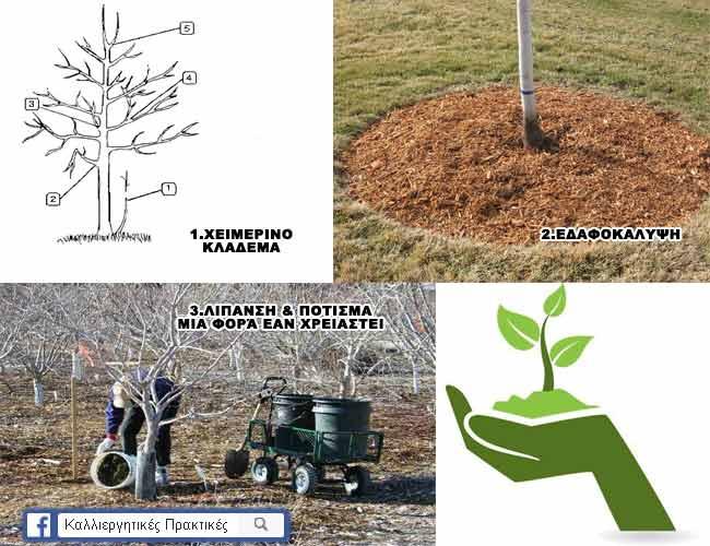 Προστατεύστε τα δέντρα σας κατα τη διάρκεια του χειμώνα - Οι πρώτες 3 μέθοδοι - Κλάδεμα, εδαφοκάλυψη, λίπανση και πότισμα