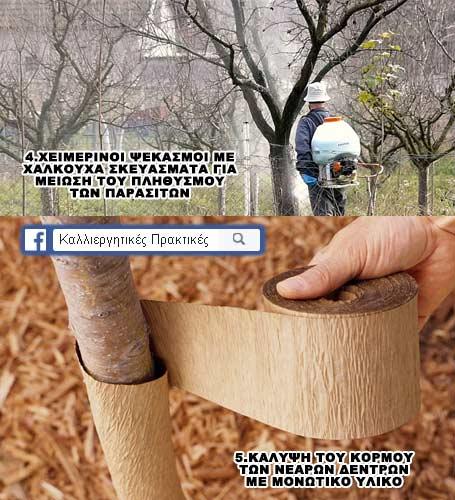 Προστατεύστε τα δέντρα σας κατα τη διάρκεια του χειμώνα - οι 2 τελευταίες μέθοδοι - Χειμερινός ψεκασμός και κάλυψη κορμου