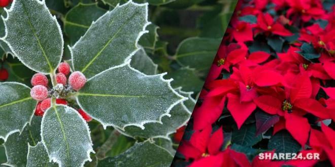 Τα πιο Δημοφιλή Φυτά των Χριστουγέννων