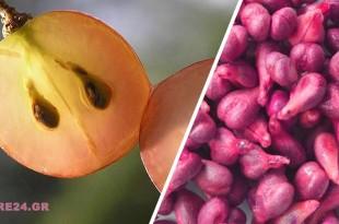 Το Εκχύλισμα Αυτών των Σπόρων Μπορεί να Προλαμβάνει & να Καταστρέφει τα Καρκινικά Κύτταρα Σύμφωνα με τους Επιστήμονες