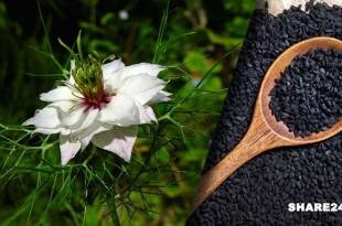 Οι Μαύροι Σπόροι Αυτού του Βοτάνου Μπορούν να Θεραπεύσουν Κάθε Ασθένεια Εκτός από το Θάνατο