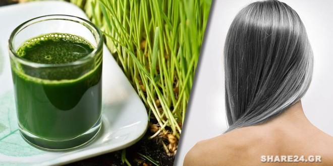 Μόλις δείτε τι θα συμβεί στα Γκρίζα Μαλλιά θα Αρχίσετε να Πίνετε Σιταρόχορτο Κάθε Μέρα!