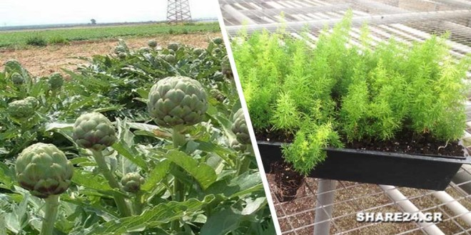 Ποια Φυτά Μπορούν να Φυτευθούν με Σπόρο στα τέλη του Γενάρη