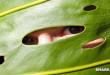 Τα Φυτά έχουν Πρωτόγονα Μάτια και Μπορούν να Βλέπουν!