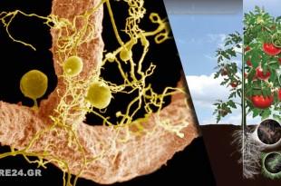 Το Μυστικό για να Βελτιώσετε το Χώμα του Κήπου Σας είναι οι Συμβιωτικοί Μύκητες (Μυκόρριζα) - Διαβάστε τι Πρέπει να Κάνετε