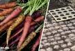 6 Συμβουλές για να Μεγαλώσετε τα Καλύτερα Καρότα που είχατε ποτέ στον Κήπο Σας