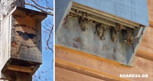 Φτιάξτε Ένα Σπιτάκι για τις Νυχτερίδες & Προσελκύστε τες στον Κήπο Σας - Μάθετε Γιατί