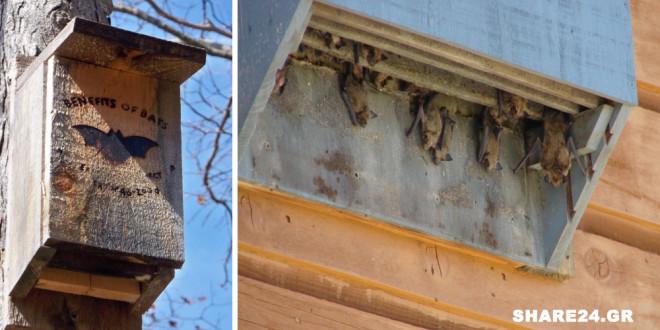 Φτιάξτε Ένα Σπιτάκι για τις Νυχτερίδες & Προσελκύστε τες στον Κήπο Σας – Μάθετε Γιατί