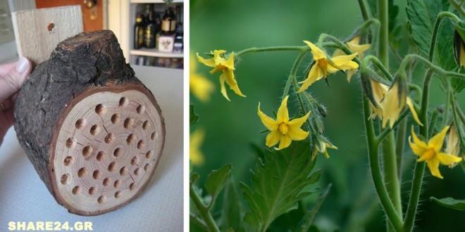 Κάντε Μερικές Τρύπες σε ένα Κομμάτι Ξύλου & Κρεμάστε το στον Κήπο Σας για να Αυξήσετε την Παραγωγή των Καλλιεργειών Σας - Μάθετε Γιατί