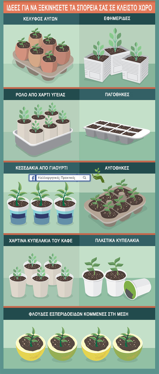 Ιδέες για σπορεία ώστε να φυτέψετε τους σπόρους των φυτών σας - σε κέλυφος αυγών, σε παγοθήκες, σε κεσεδάκια γιαουρτιού, σε αυγοθήκες, σε φλούδες εσπεριδοειδών, σε πλαστικά & χάρτινα κυπελάκια, σε ρολά χαρτιού υγείας και σε εφημερίδες
