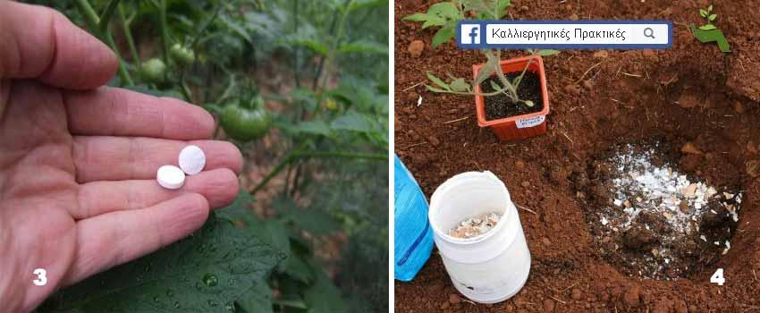 8 συστατικά που βελτιώνουν ποιοτικά τις ντομάτες όταν εφαρμοστούν στη θέση φύτευσης - ασπιρίνη και κέλυφος αυγού