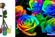 Φτιάξτε Πολύχρωμα Τριαντάφυλλα με Αυτόν τον Οδηγό Βήμα προς Βήμα & Εντυπωσιάστε τους Φίλους Σας