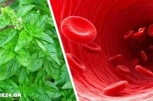 Η Αντιοξειδωτική Ασπίδα του Βασιλικού που Καθαρίζει το Αίμα από τις Τοξίνες & Ρίχνει τη Χοληστερίνη
