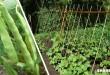 Πως θα Καλλιεργήσετε Φασολάκια στον Κήπο – Ένας Ολοκληρωμένος Οδηγός Βήμα προς Βήμα