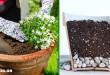 Πρέπει να Τοποθετούμε Χαλίκια στο Κάτω μέρος της Γλάστρας Ή Βλάπτουμε έτσι τα Φυτά Μας;