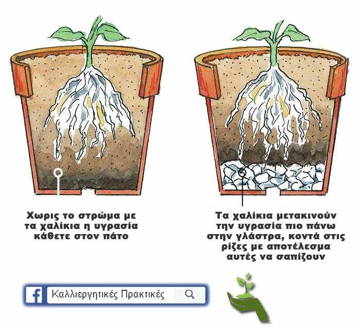 Τα χαλίκια μεταφέρουν την υγρασία κοντά στις ρίζες του φυτού