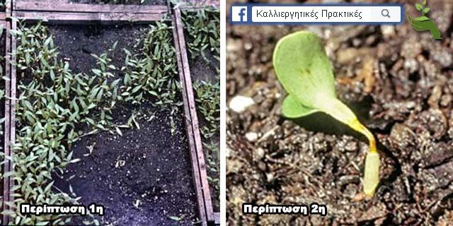 Τα πιό κοινά προβλήματα φύτρωσης των σπόρων - Οι σπόροι δεν φυτρώνουν, τήξεις φυταρίων