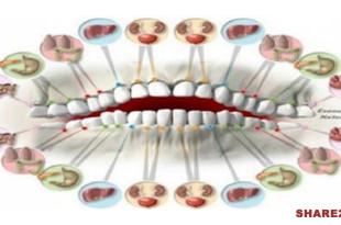 Κάθε Δόντι είναι Συνδεδεμένο με Ένα Όργανο του Σώματος - Ο Πόνος στα Δόντια Μπορεί να είναι Ένδειξη Ασθένειας